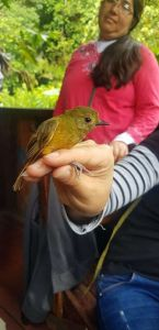 SUCCESSFUL ORNITHOLOGY COURSE AND SCIENTIFIC CAMP IN CHONTACHAKA
