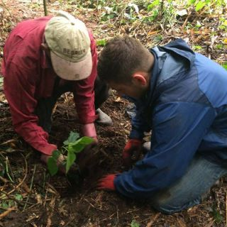 WE CONTINUE REFORESTING